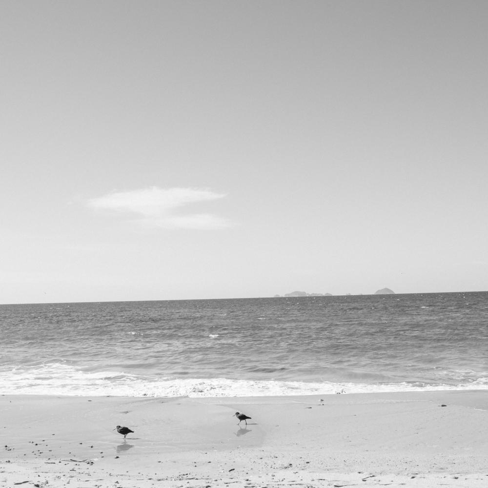 Oystercatchers. Te Karo Bay, New Zealand.