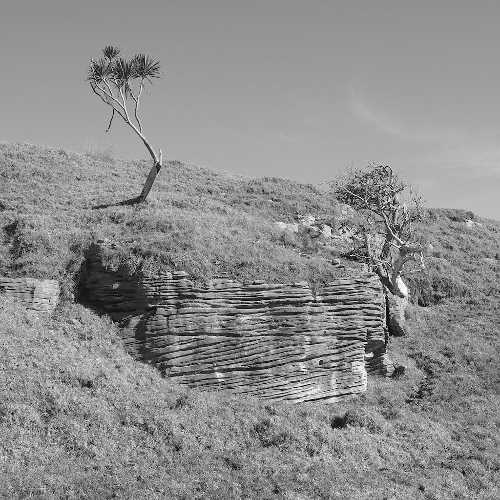 Elgood Limestone. Te Akau. New Zealand