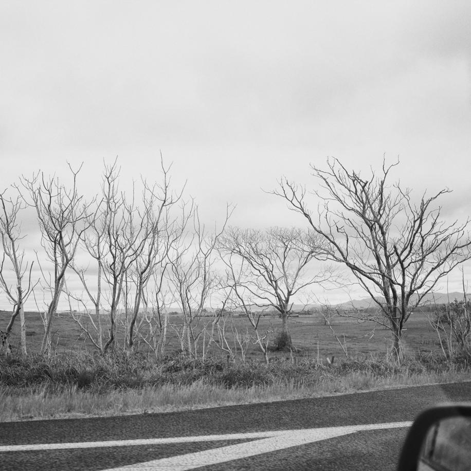 a-strangetrees